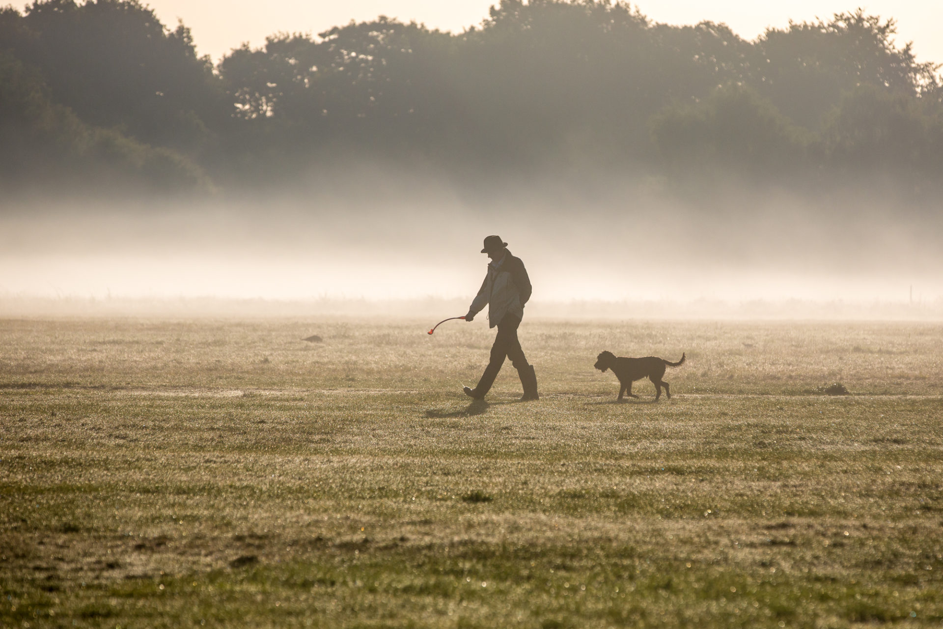 Walking dogs on Wimbledon & Putney Common