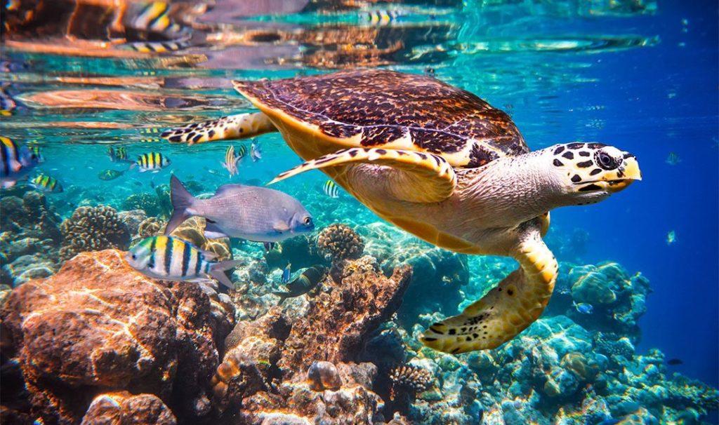 sea-ocean-animals